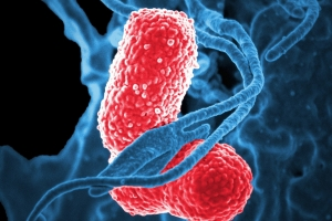 Antimicrobial peptides: the naturally found sentinels against microbes